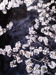 目黒川の桜攻略法。_d0137764_1202121.jpg