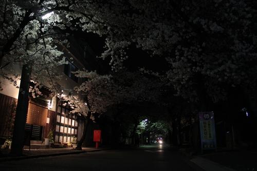 箕面市 夜桜_d0202264_21454129.jpg