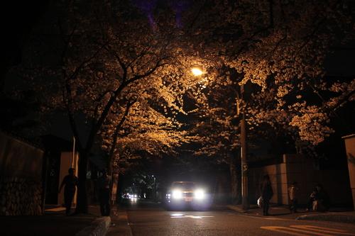 箕面市 夜桜_d0202264_2146670.jpg