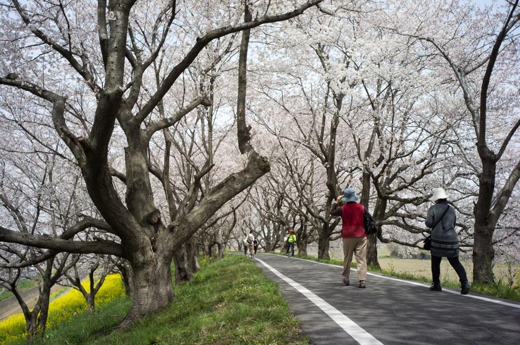 今年も吉見の桜堤へ_d0123171_19562224.jpg