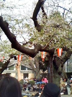 桜_e0172872_19565463.jpg