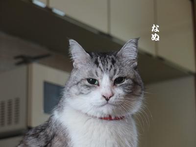 DAY OFF:桜_a0180681_15471759.jpg