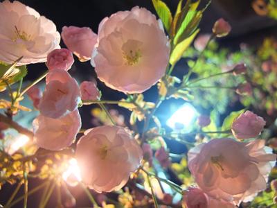 DAY OFF:桜_a0180681_23403169.jpg