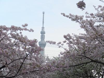 DAY OFF:桜_a0180681_23451045.jpg