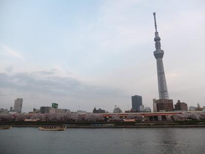 DAY OFF:桜_a0180681_2345234.jpg