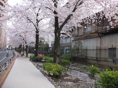 DAY OFF:桜_a0180681_23521641.jpg