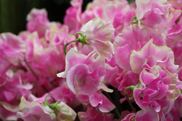 春爛漫~!良き、1日でした~!_d0060693_19505723.jpg