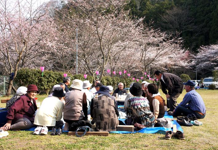 桜満開次々と_b0145296_782849.jpg