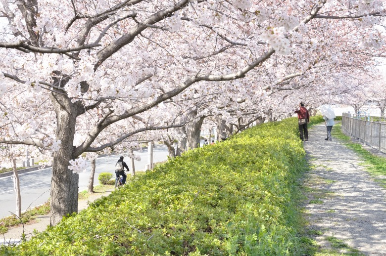 桜の木の下で vol.2_e0184300_8485598.jpg