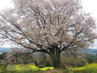 とっておきの桜_f0040201_2073078.jpg