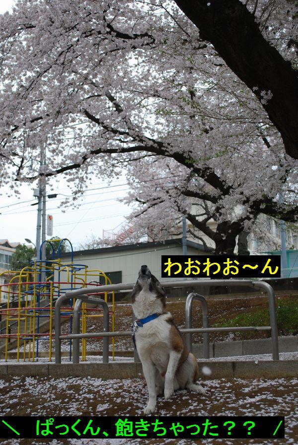 f0109202_2048687.jpg