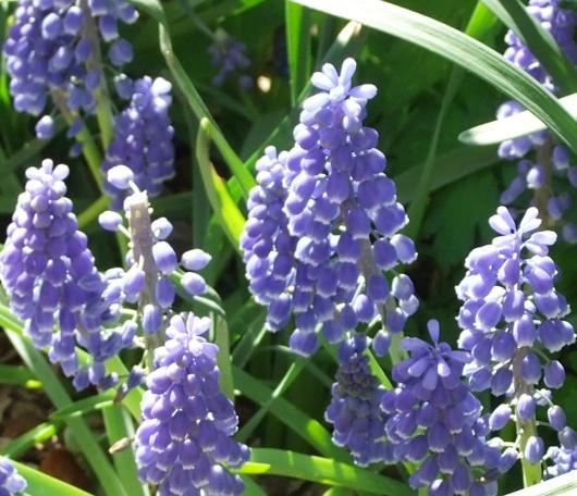 シェークスピア・ガーデンの春の様子_b0007805_06428.jpg