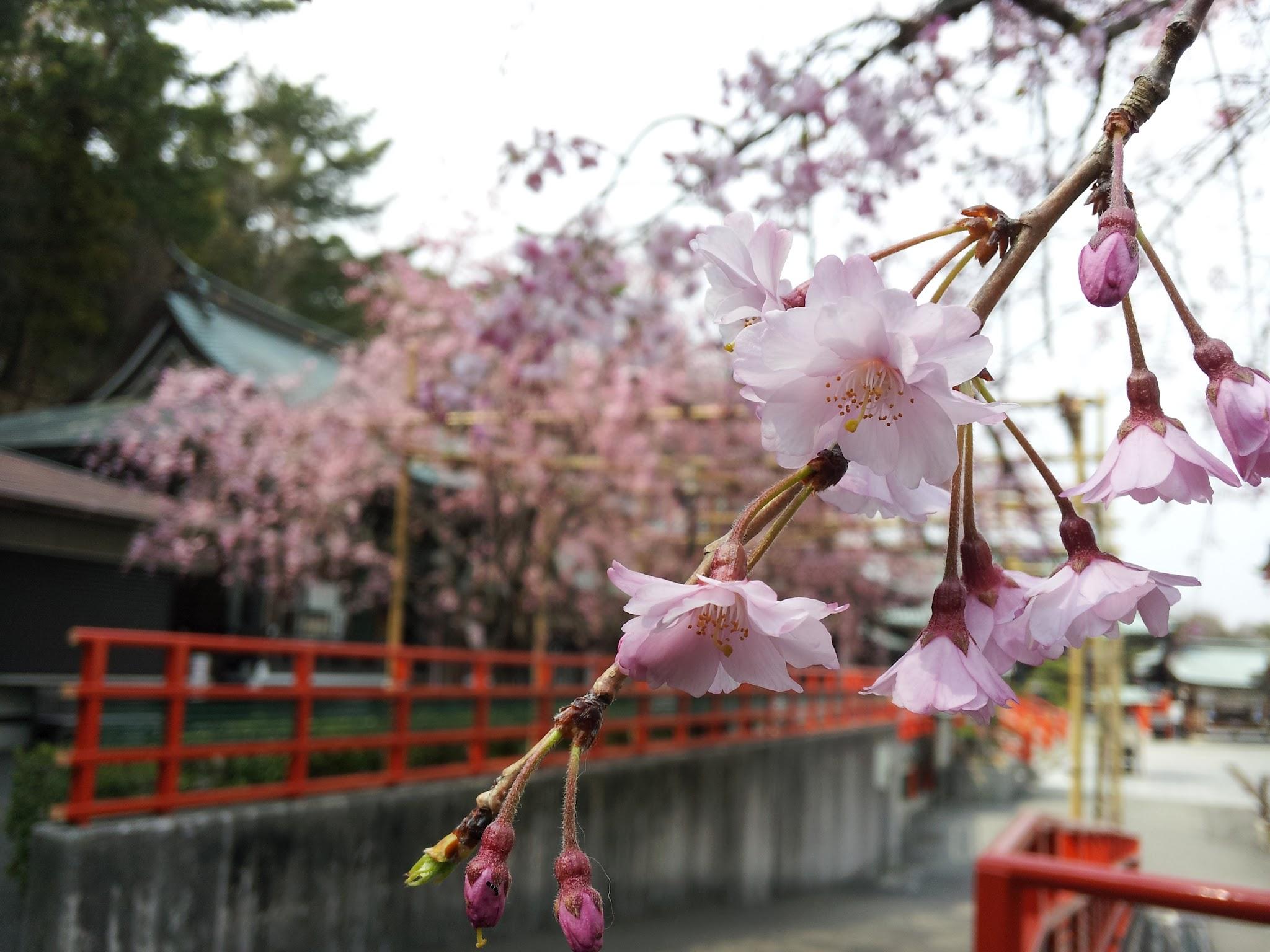 花見_f0213410_1245392.jpg