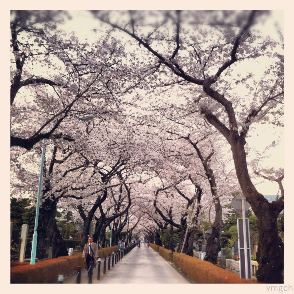 桜 photo by Instagram_f0157812_12122495.jpg