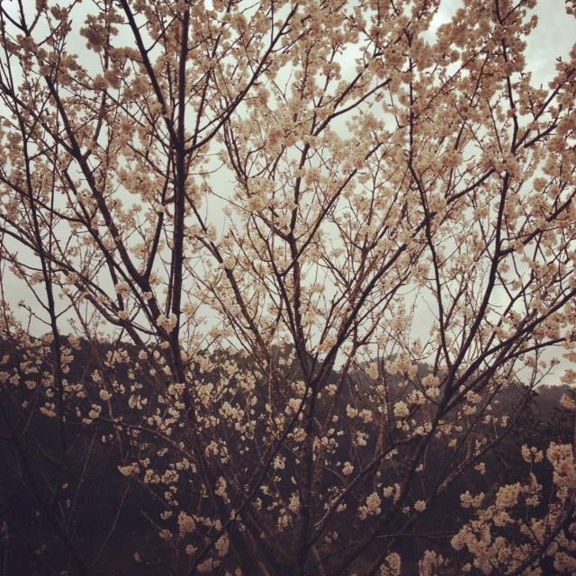 春の雨_b0169513_9442880.jpg