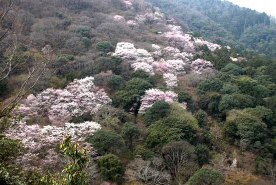 嵐山 渡月橋と亀山公園_e0048413_1810263.jpg