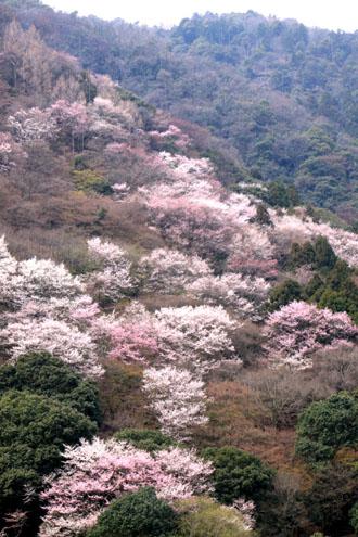 嵐山 渡月橋と亀山公園_e0048413_1810374.jpg
