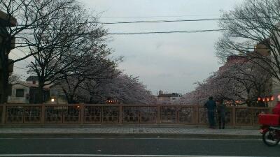 桜_b0157416_135762.jpg