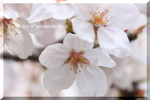 f0197317_73241.jpg