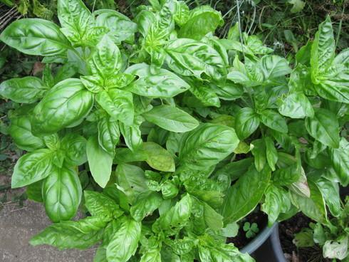 2012の「種植え」☆「芽だし」の季節です☆_a0125419_15344493.jpg