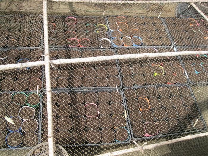 2012の「種植え」☆「芽だし」の季節です☆_a0125419_15583328.jpg