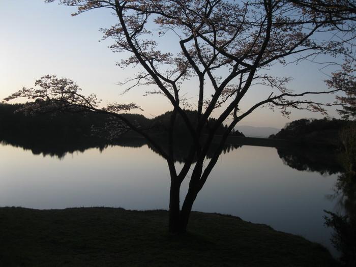 桜の下で~♪_a0125419_2324299.jpg