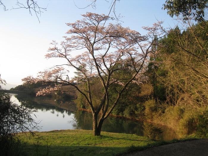 桜の下で~♪_a0125419_2393157.jpg