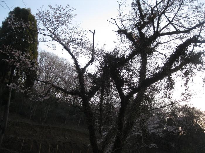 桜の下で~♪_a0125419_239662.jpg