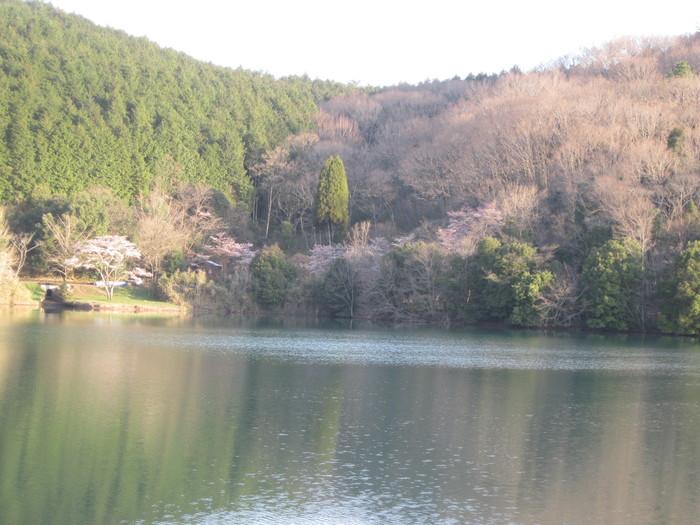 桜の下で~♪_a0125419_2423458.jpg