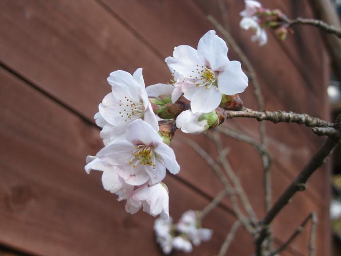 桜の下で~♪_a0125419_243470.jpg