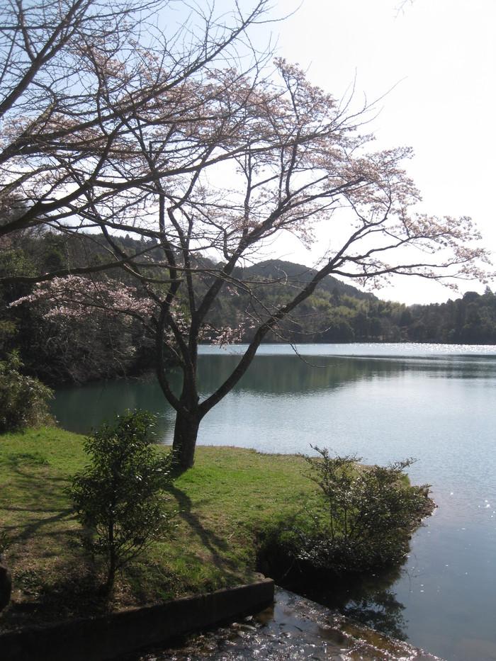 桜の下で~♪_a0125419_2442472.jpg