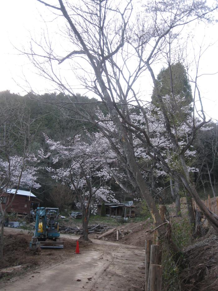 桜の下で~♪_a0125419_33931.jpg