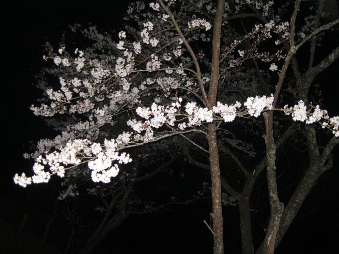 桜の下で~♪_a0125419_354980.jpg