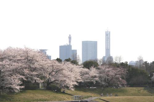 「さくら・桜・サクラ」 の風景_d0150720_9303316.jpg