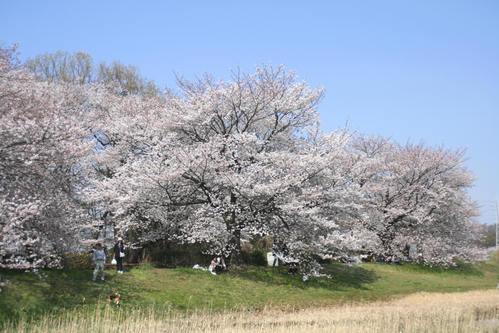 「さくら・桜・サクラ」 の風景_d0150720_9305664.jpg