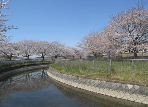 「さくら・桜・サクラ」 の風景_d0150720_9314767.jpg