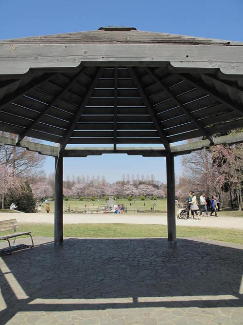 「さくら・桜・サクラ」 の風景_d0150720_9324779.jpg