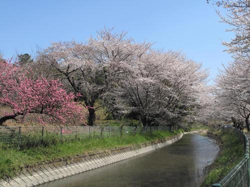 「さくら・桜・サクラ」 の風景_d0150720_932540.jpg