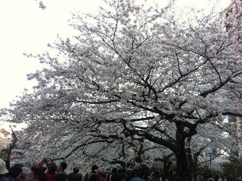 今週のお花とセール情報_a0200423_1932271.jpg