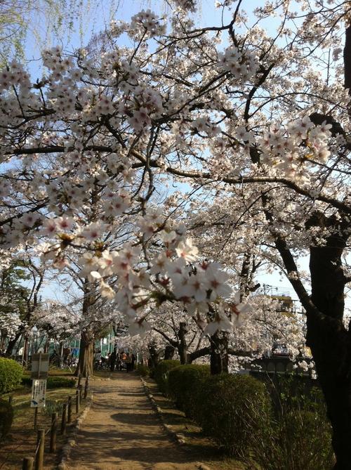 今週のお花とセール情報_a0200423_19332868.jpg