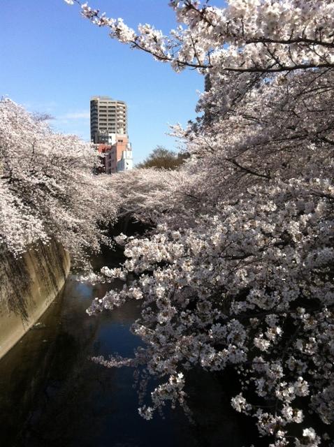 今週のお花とセール情報_a0200423_19374089.jpg