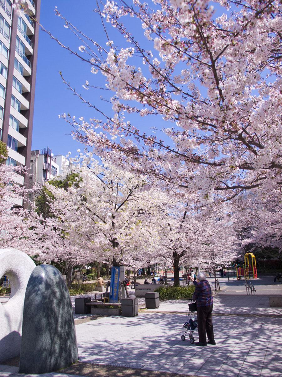 桜。(現実逃避中...。)_e0096928_0541853.jpg