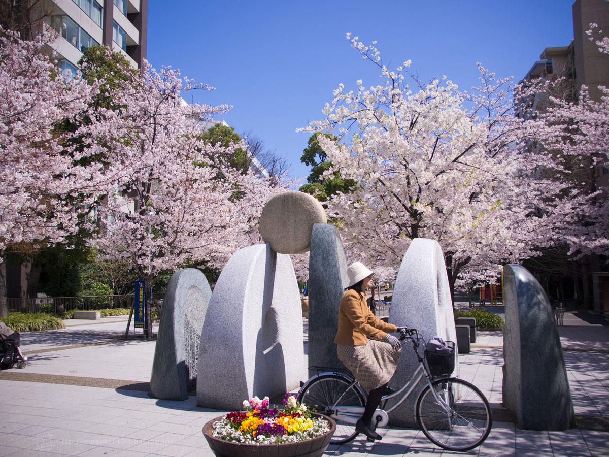 桜。(現実逃避中...。)_e0096928_0542979.jpg