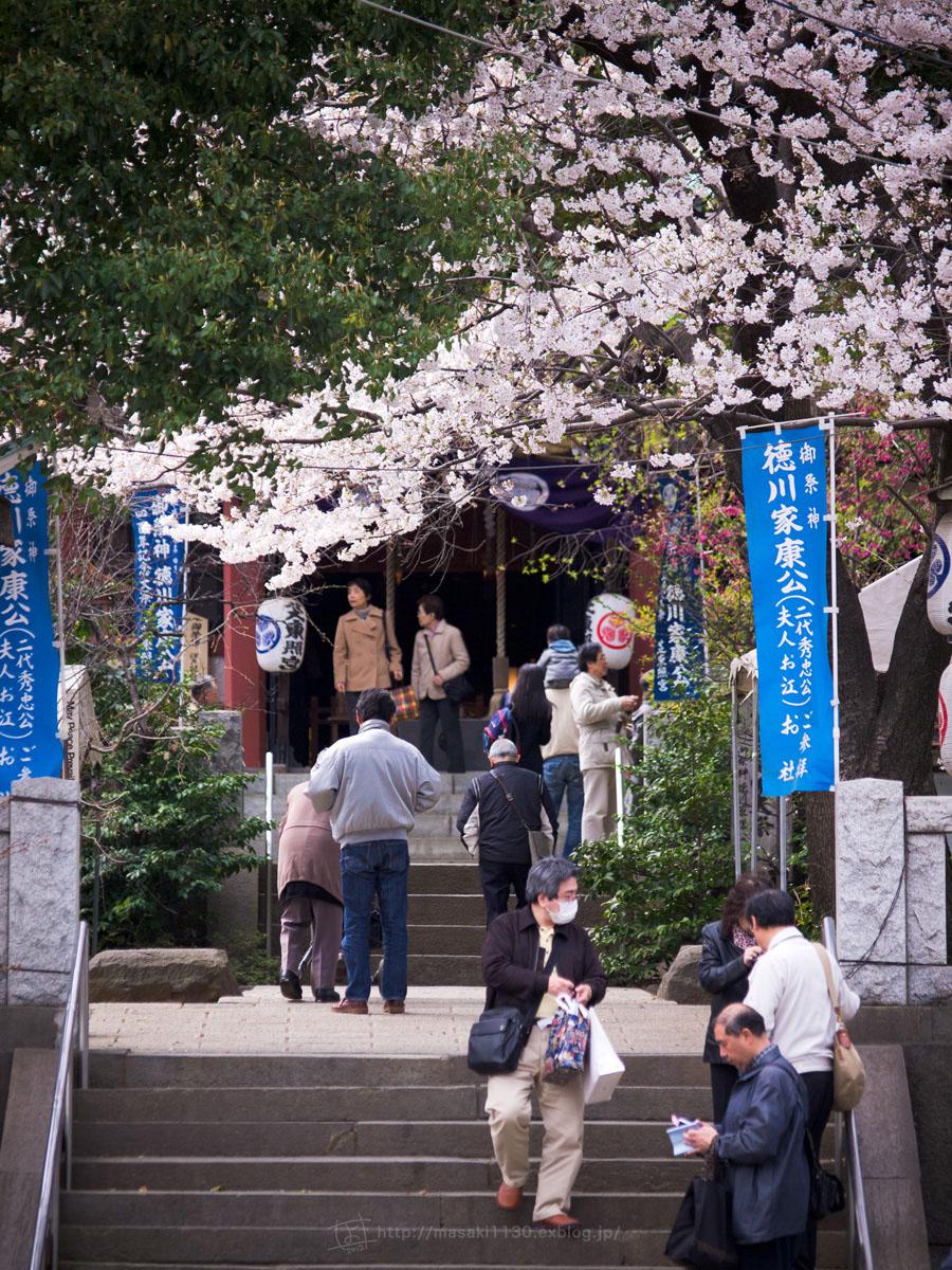 桜。(現実逃避中...。)_e0096928_0545214.jpg