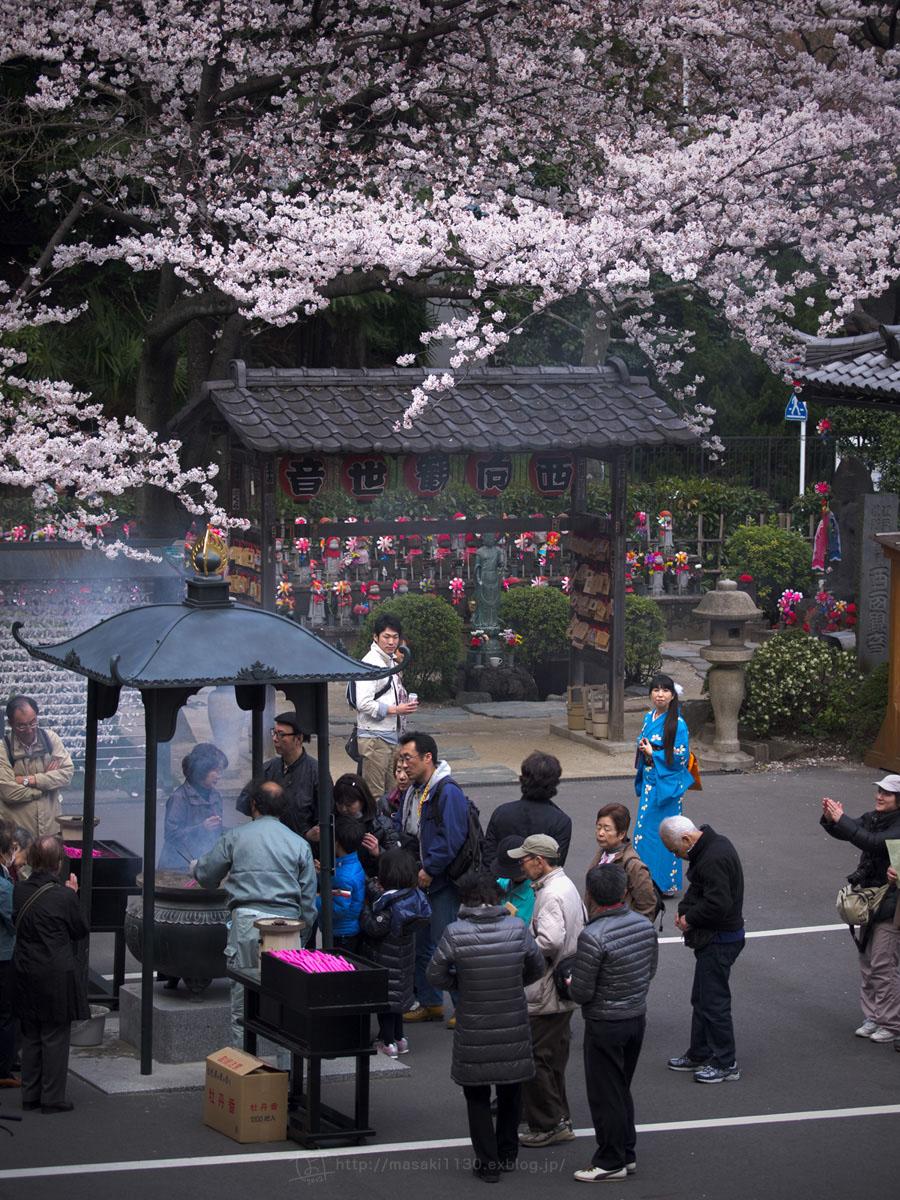 桜。(現実逃避中...。)_e0096928_0553282.jpg