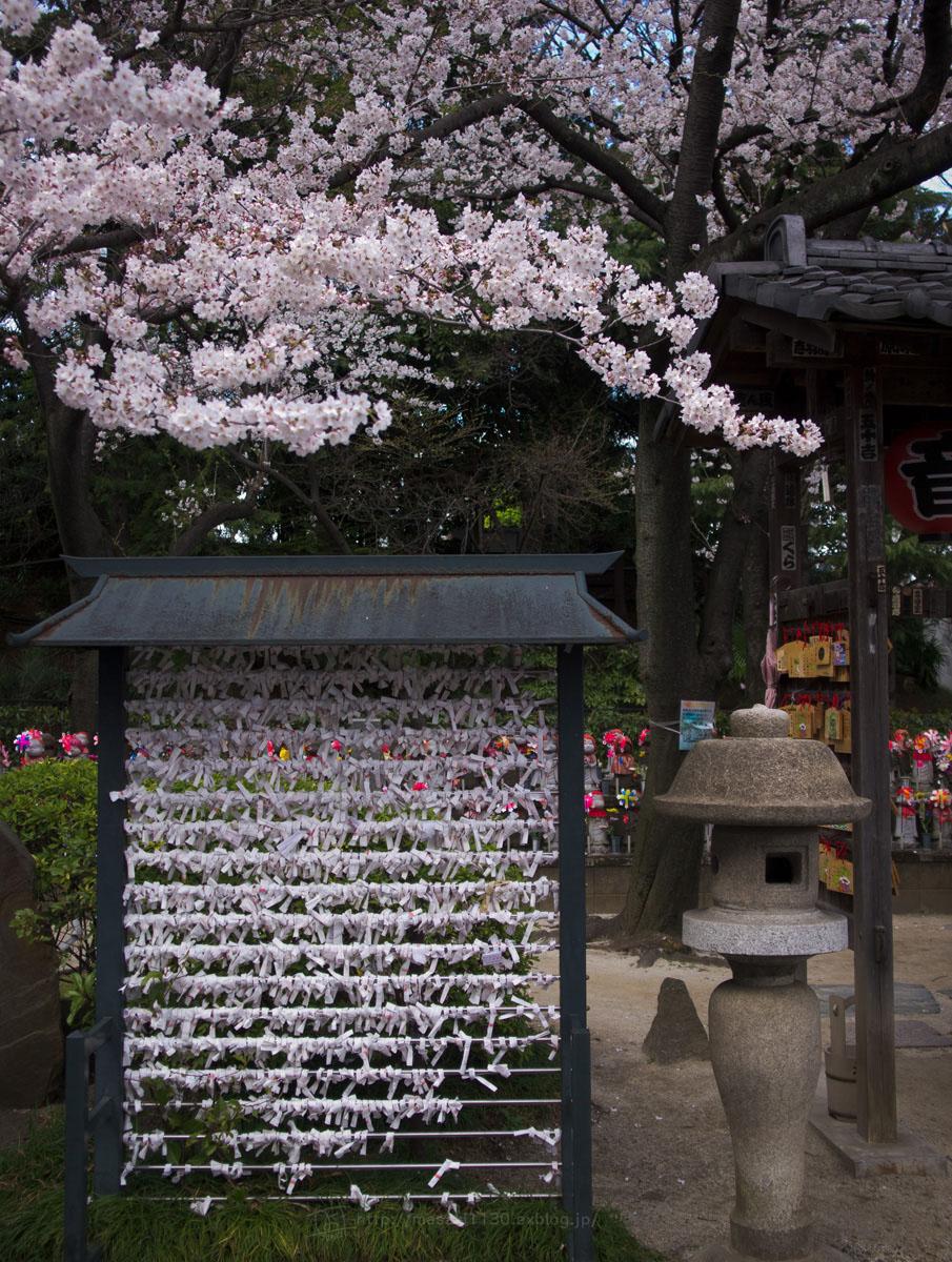 桜。(現実逃避中...。)_e0096928_05619100.jpg