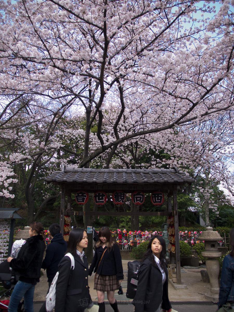 桜。(現実逃避中...。)_e0096928_0563198.jpg