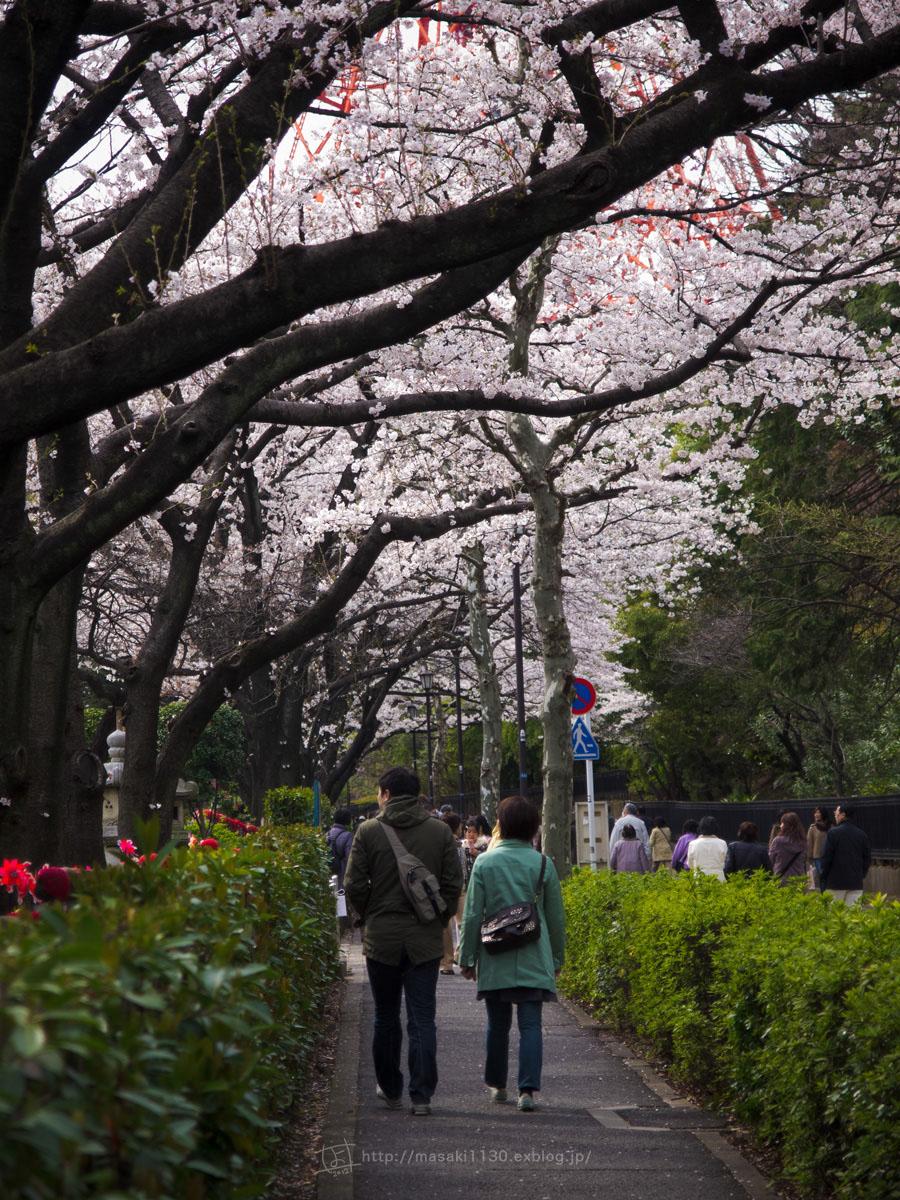 桜。(現実逃避中...。)_e0096928_056599.jpg