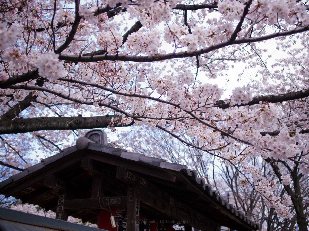 桜。(現実逃避中...。)_e0096928_056969.jpg