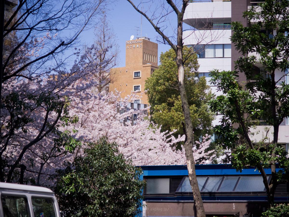 桜。(現実逃避中...。)_e0096928_0573812.jpg